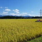 2018年産の主食用米の収穫量と作況指数が確定しました【12月10日付】