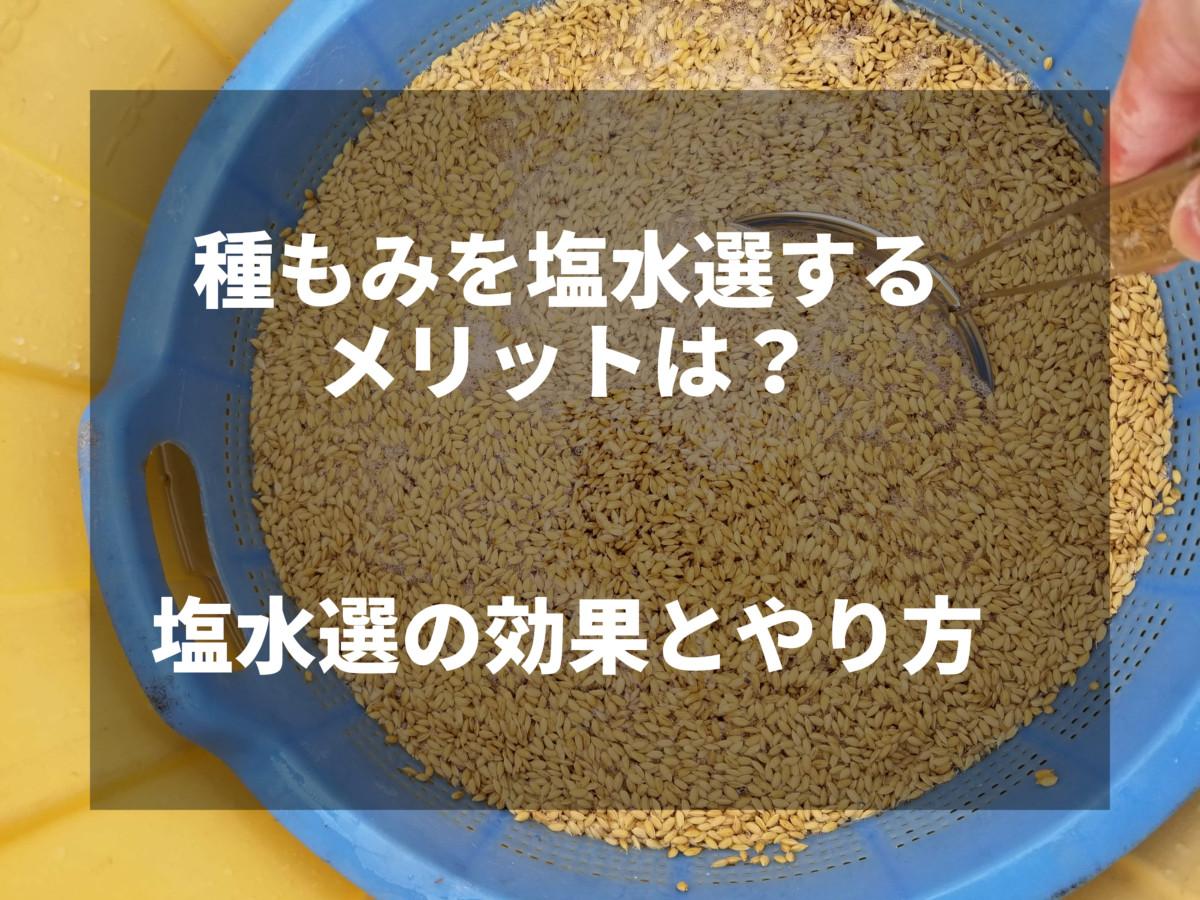 種もみを塩水選するメリットは?塩水選の効果とやり方を紹介します
