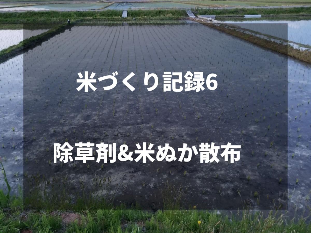 除草剤&米ぬか散布|2019米づくり記録6