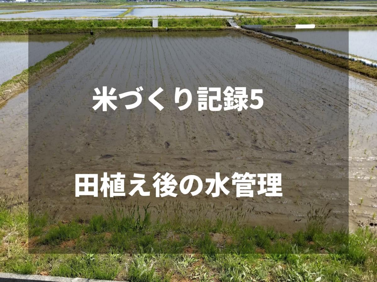 田植え後の水管理|2019米づくり記録5