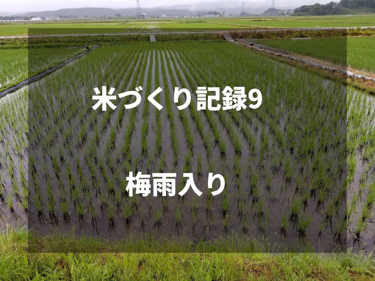 梅雨入り|2019米づくり記録9