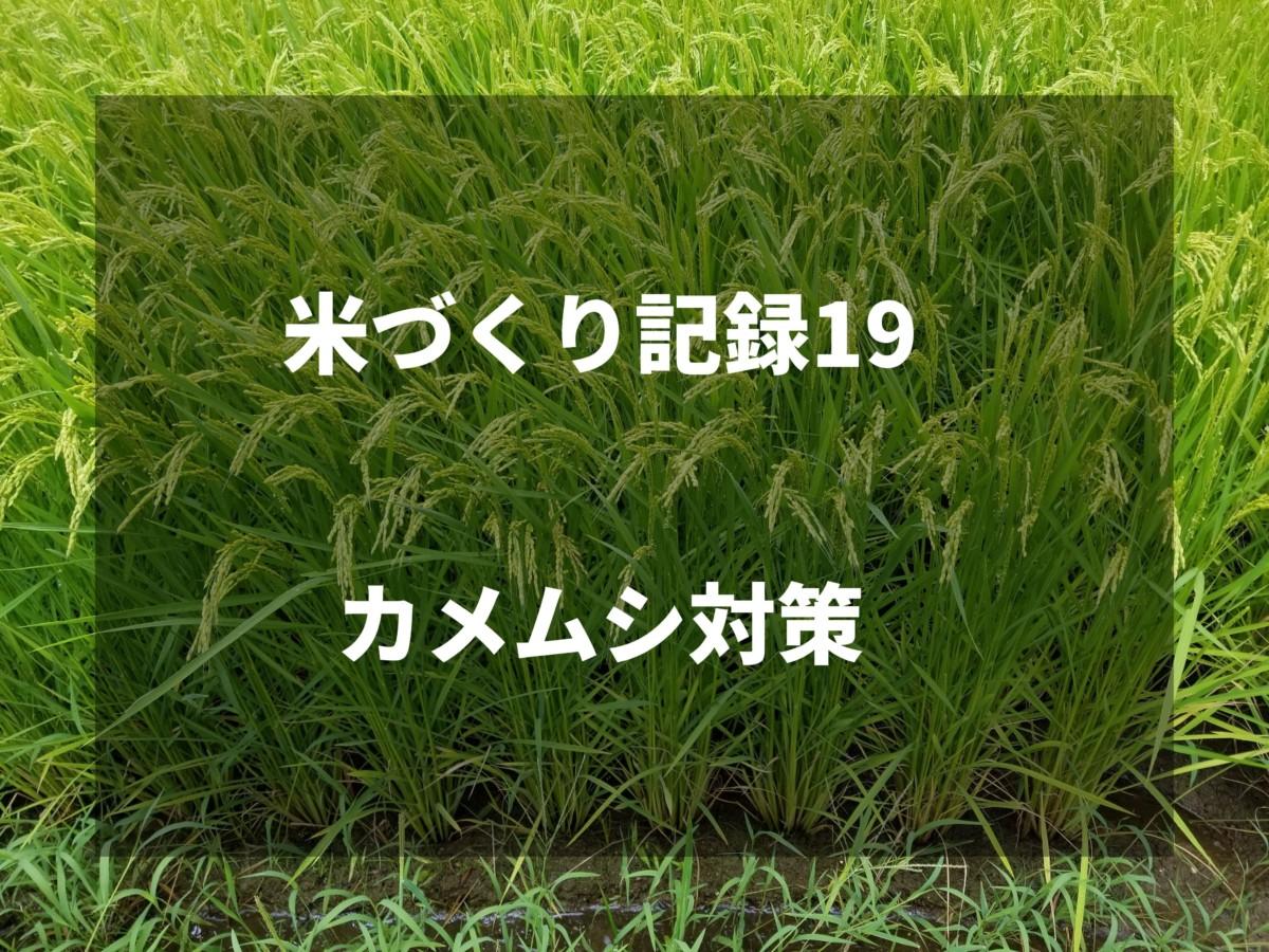 田んぼのカメムシ対策|2019米づくり記録19
