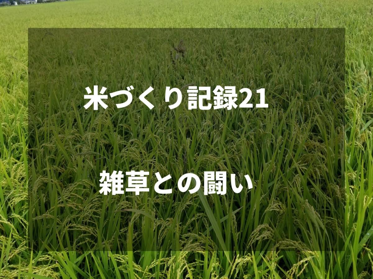 雑草との闘い|2019米づくり記録21