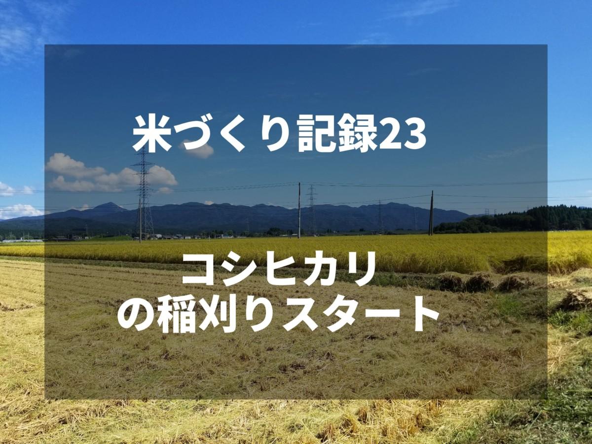 コシヒカリの稲刈りスタート|2019米づくり記録23