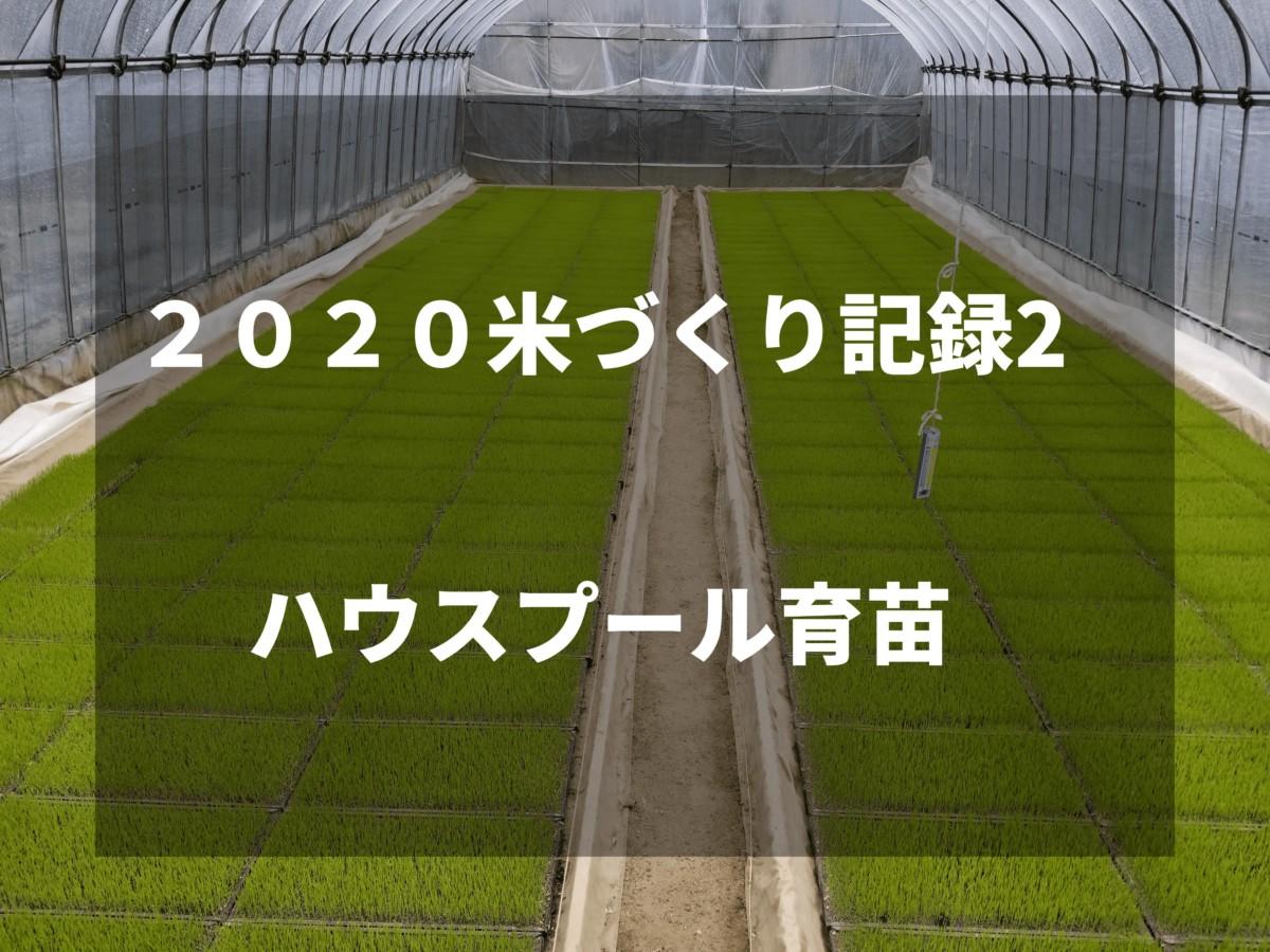 ハウスプール育苗|2020米づくり記録2