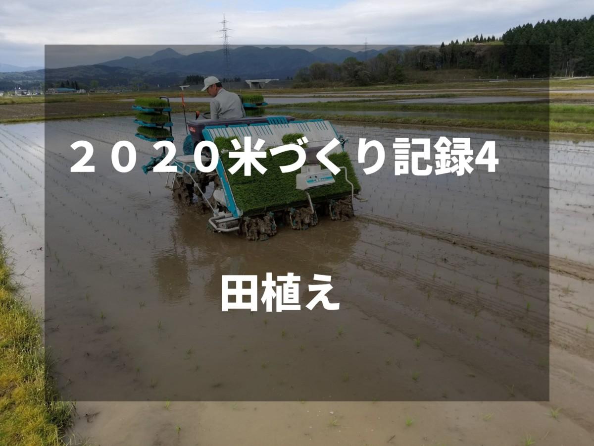 田植え|2020米づくり記録4