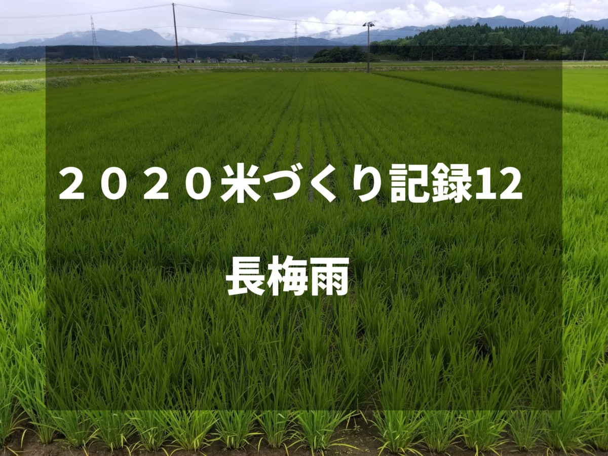 長梅雨|2020米づくり記録12
