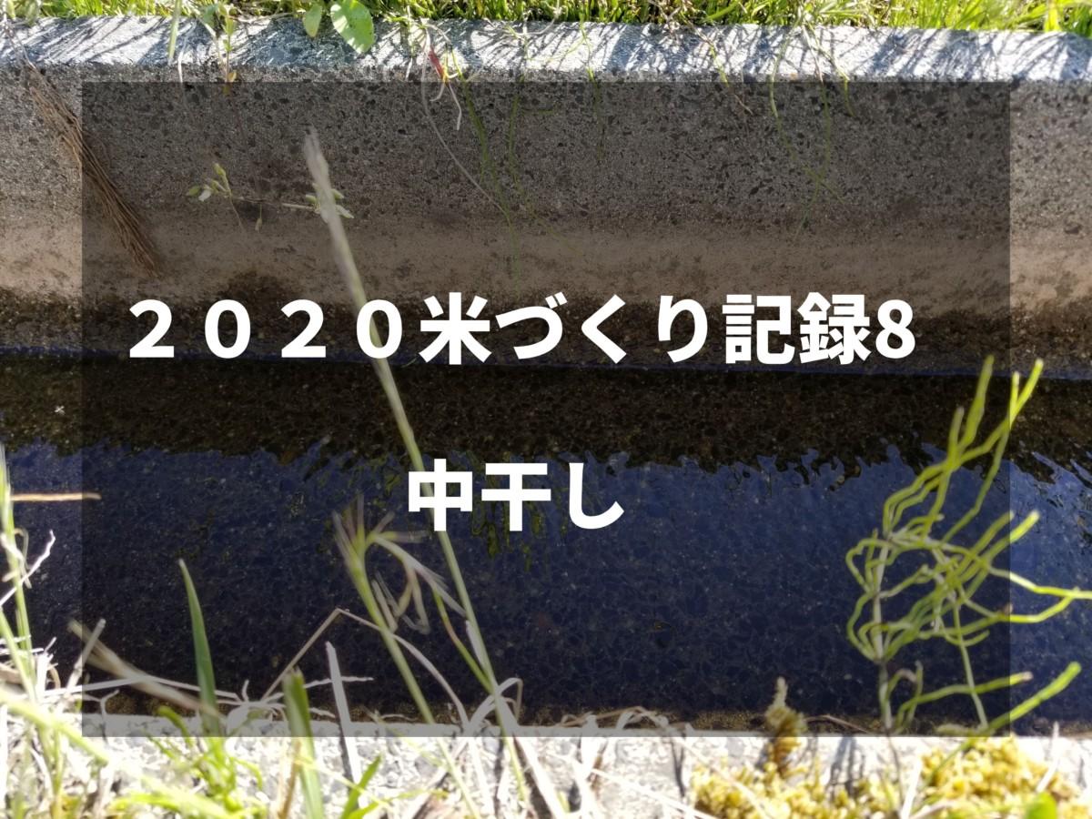 中干し|2020米づくり記録8
