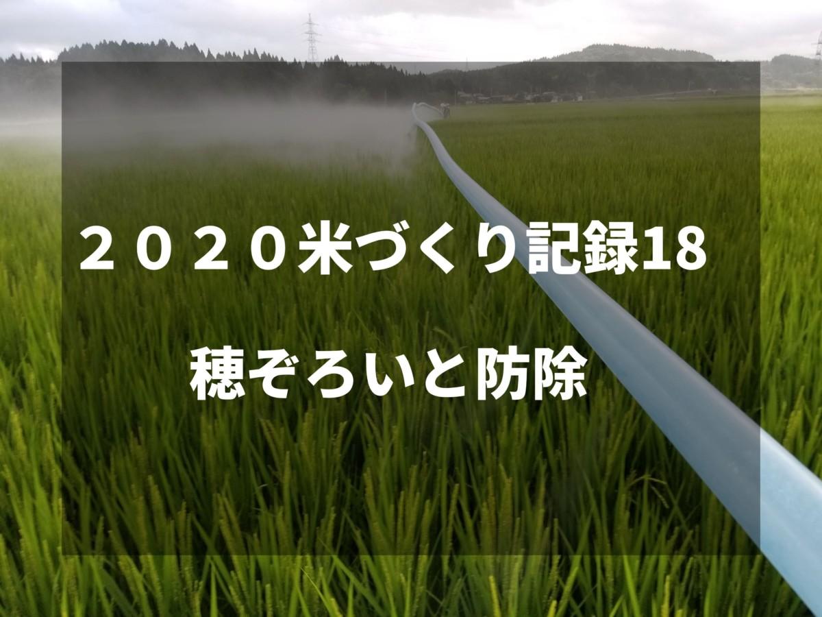 穂ぞろいと防除 2020米づくり記録18