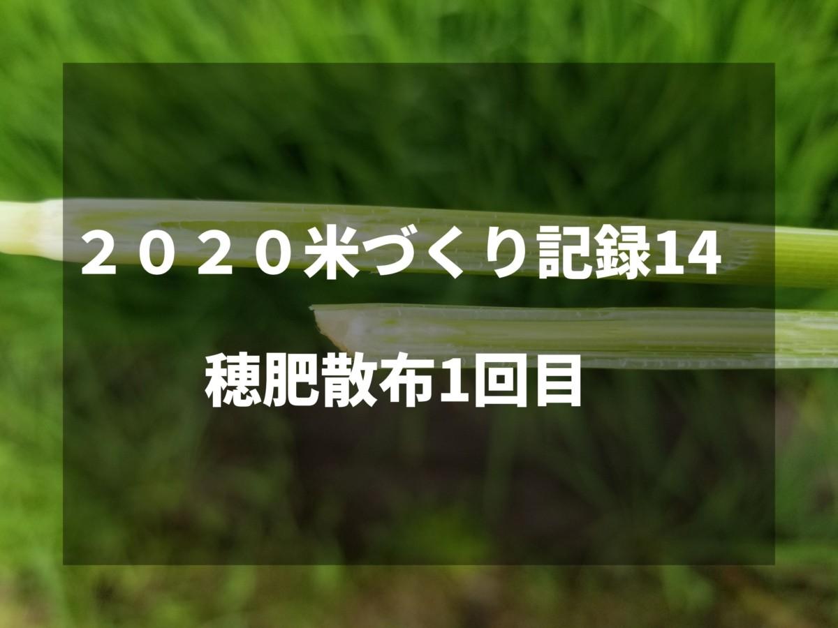 穂肥散布1回目|2020米づくり記録14