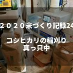 コシヒカリの稲刈り真っ只中|2020米づくり記録24