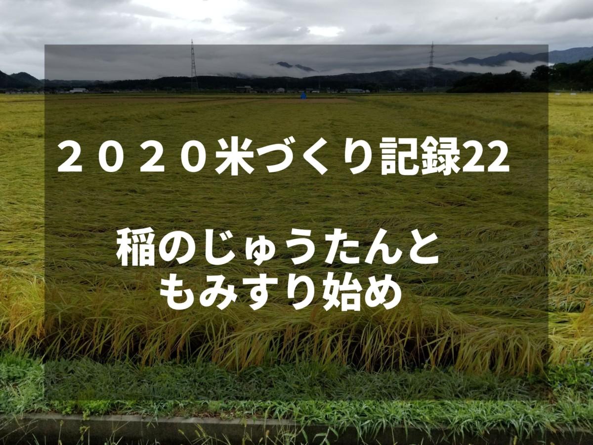 稲のじゅうたんともみすり始め|2020米づくり記録22