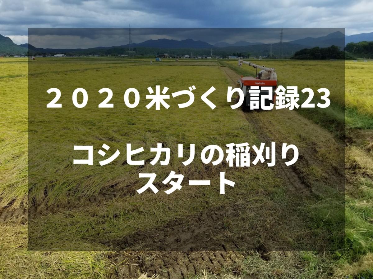 コシヒカリの稲刈りスタート|2020米づくり記録23