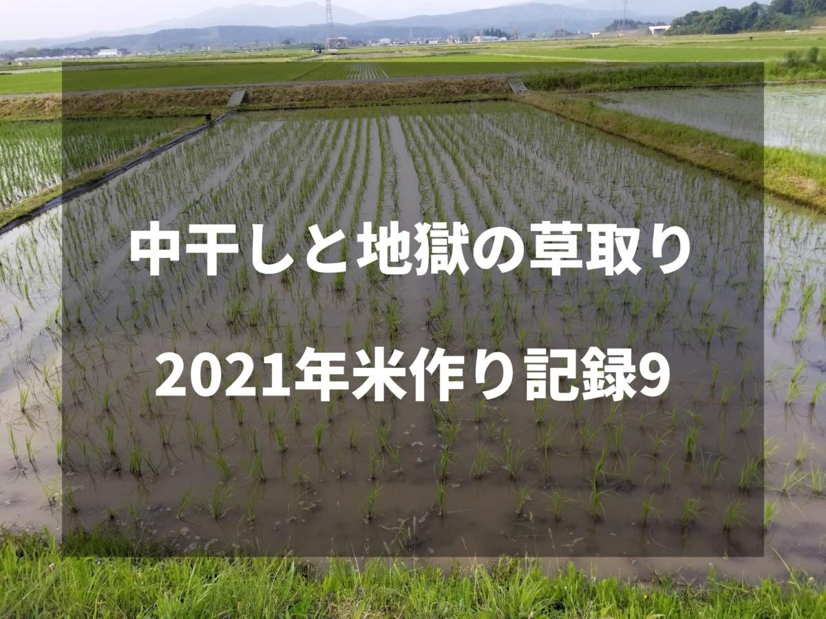 中干しと地獄の草取り|2021米作り記録9