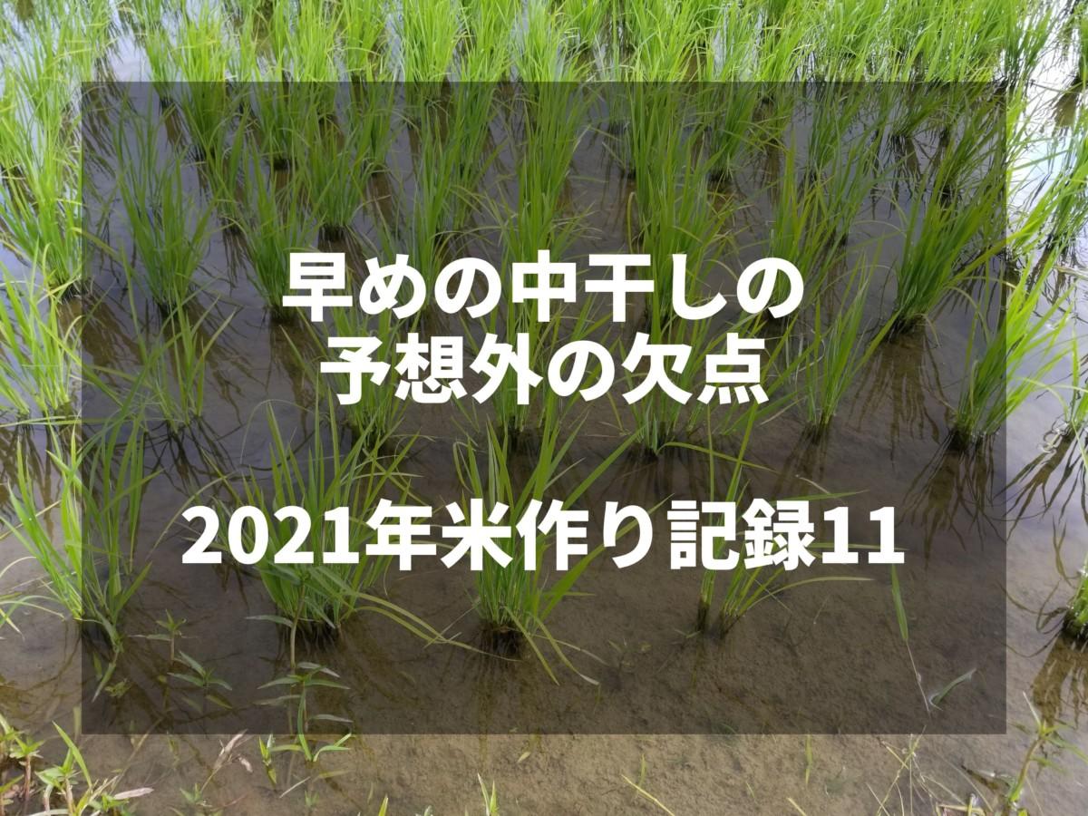 早めの中干しの予想外の欠点|2021米作り記録11