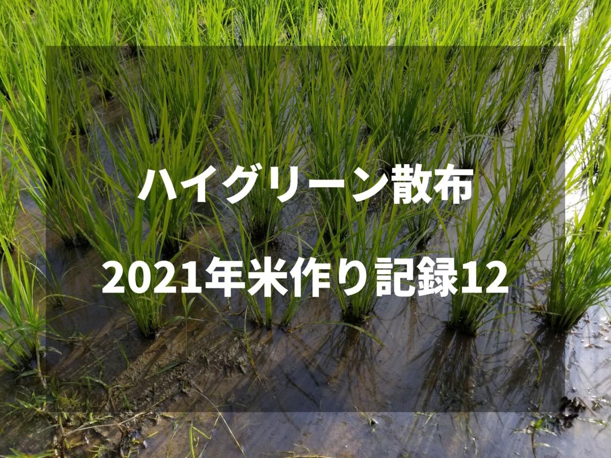 ハイグリーン散布|2021米作り記録12