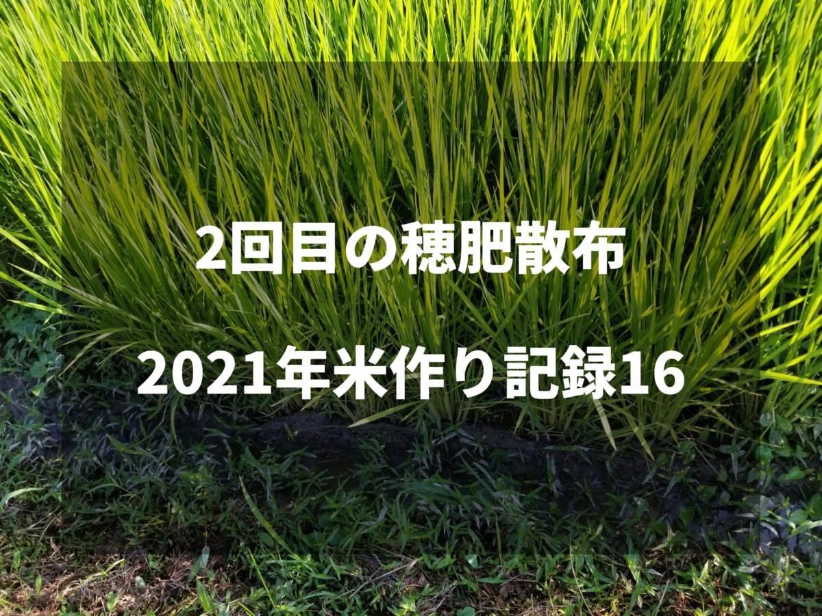 2回目の穂肥散布|2021米作り記録16