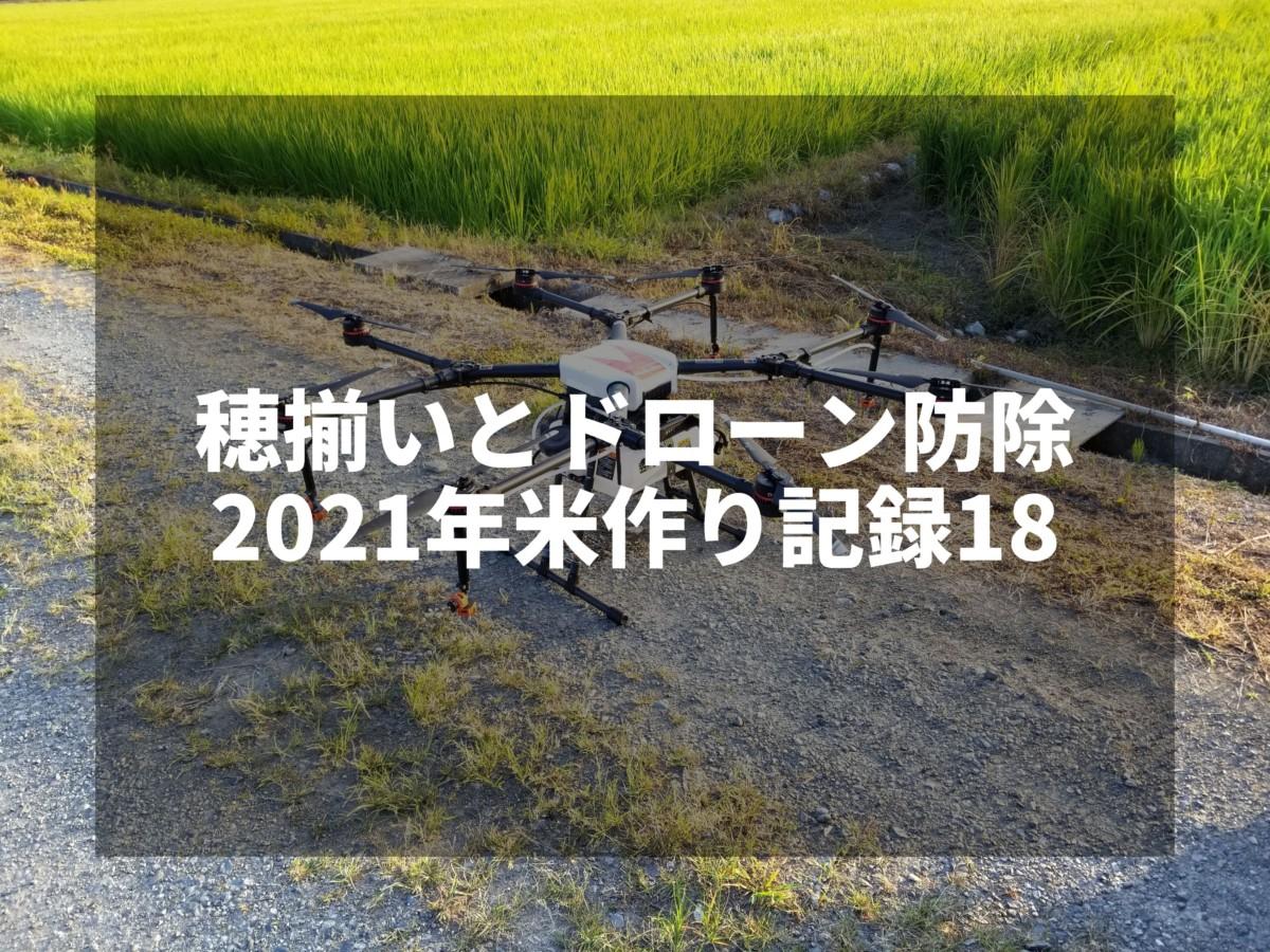 穂揃いとドローン防除|2021米作り記録18