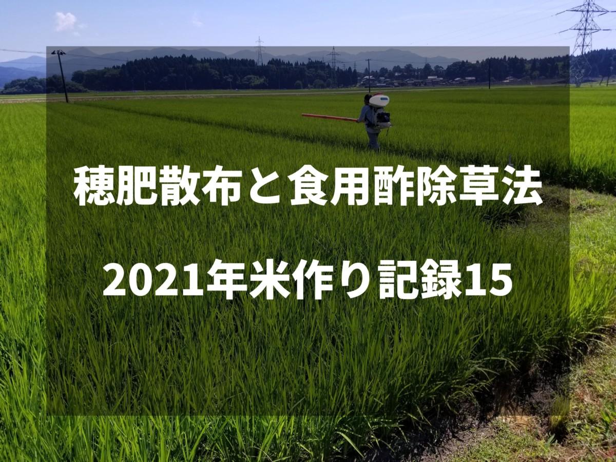 穂肥散布と食用酢除草法|2021米作り記録15
