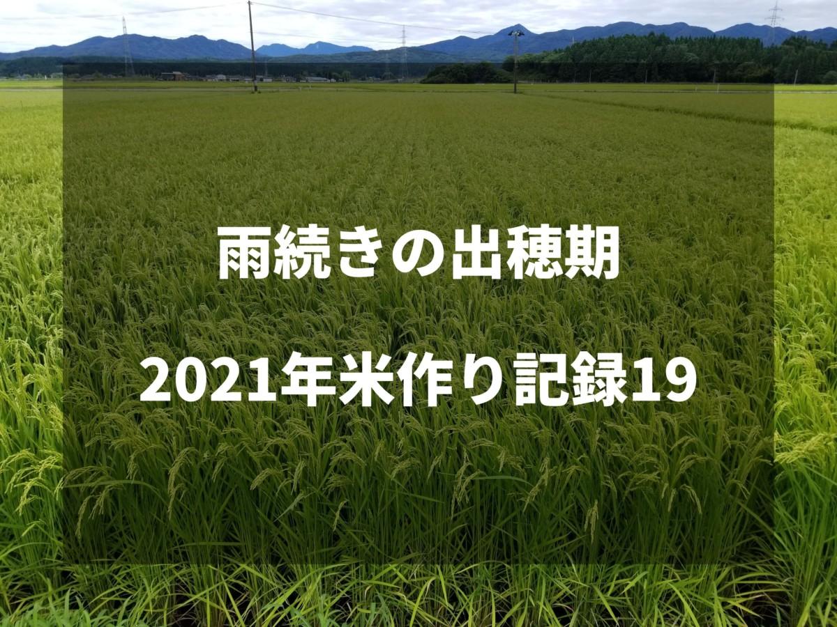 雨続きの出穂期 2021米作り記録19