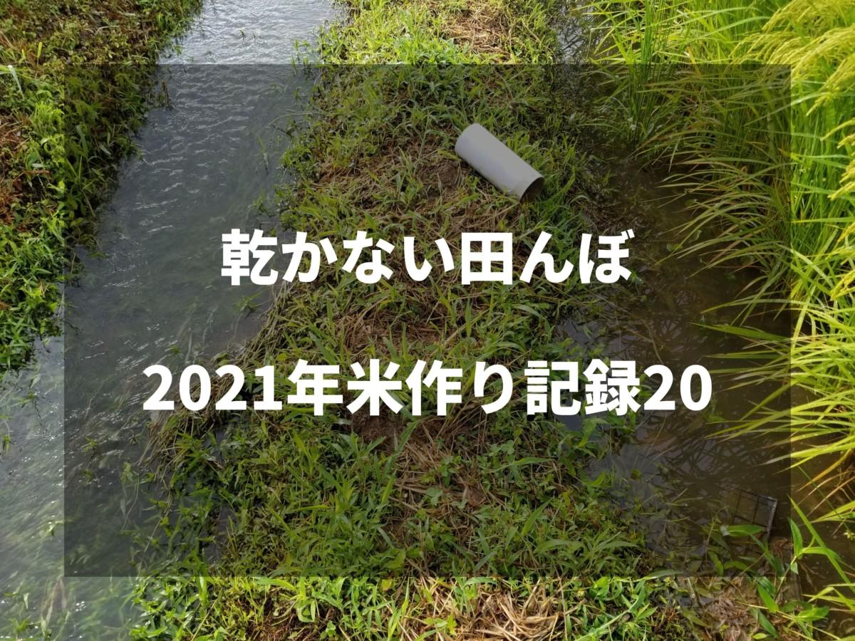 乾かない田んぼ 2021米作り記録20