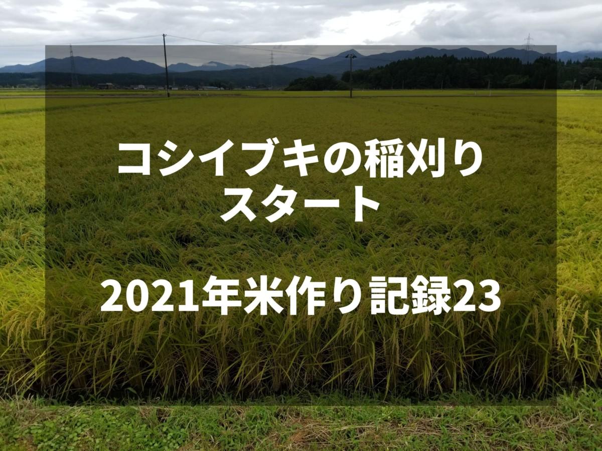 コシイブキの稲刈りスタート 2021米作り記録23